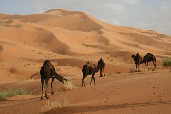 http://moroccotourtravel.com/wp-content/uploads/2016/11/calel.jpg